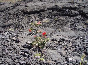20070506L Hawaii 24