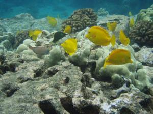 20070521L Hawaii 25
