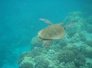 20070521L Hawaii 36