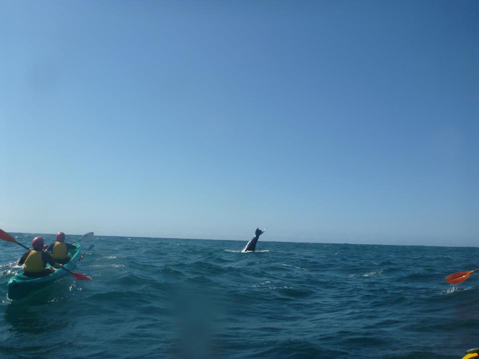 20110908_Byron_Bay_Kayaks_03