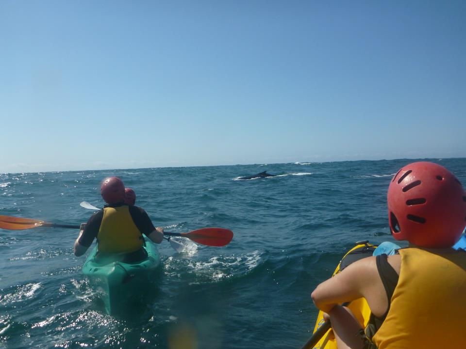 20110908_Byron_Bay_Kayaks_04