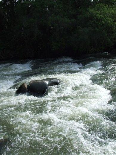20101030 Barrington River at The Cove